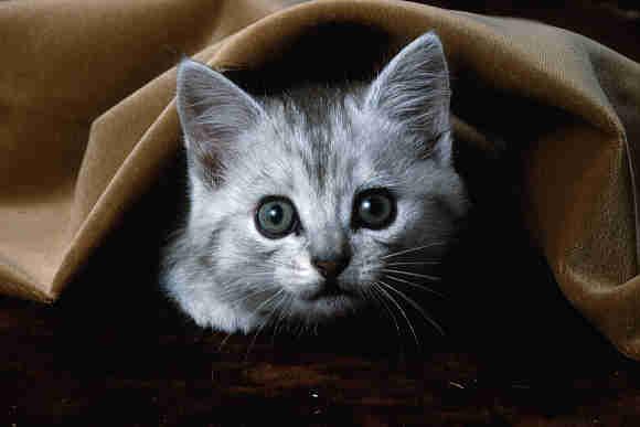 Fotografije malih i velikih mačaka - Page 6 CAT1